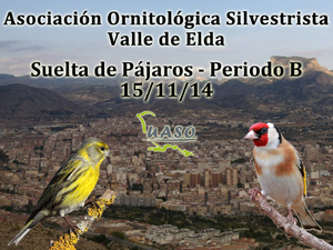Suelta de Pájaros Periodo B